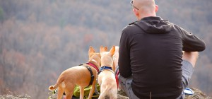 3 tips to make camping with dogs a great time