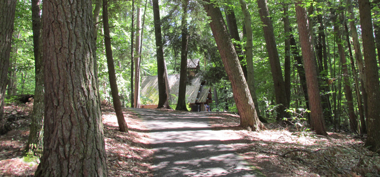 4 fun camping locations in michigan, picture of hartwick pines state park with huge trees