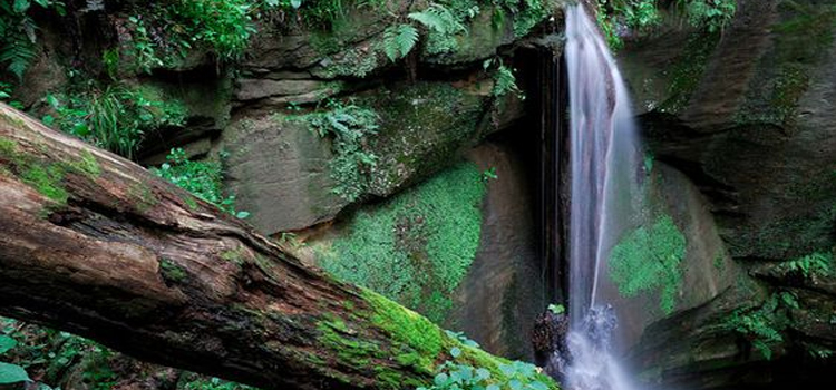 best kid friendly camping locations in ohio, picture of the waterfall at mohican state park with a huge tree stump in the foreground