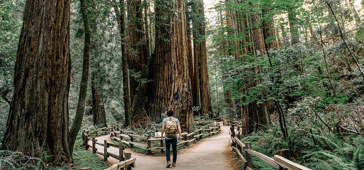 8 ways to connect with nature, picture of a guy taking a nature walk and looking up at a forest of huge trees, connect with nature